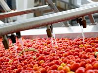 Производство и переработка овощей в Армении в 2021